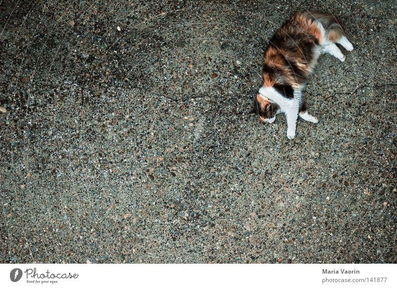 Mauz Katze Hauskatze verkatert Miau Schnurren Schnurrhaar schlafen faulenzen Haustier Tier Fell Muster Erholung Pause Stofftiere Langeweile Säugetier mietze