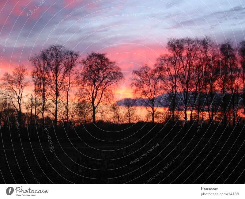Sunrise Sonnenuntergang Niederlande rot Baum Wald Horizont Abenddämmerung