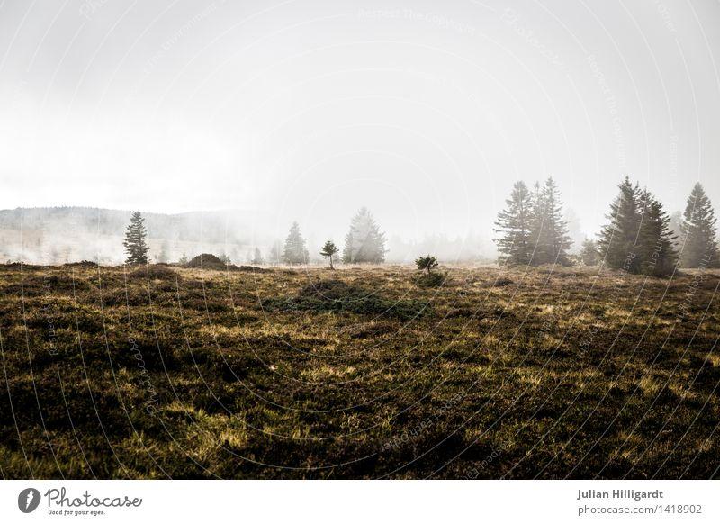 einsam im Wald Umwelt Natur Landschaft Pflanze Himmel Nebel Baum Gras außergewöhnlich bedrohlich gruselig Gefühle Kraft Abenteuer Zufriedenheit Desaster kalt