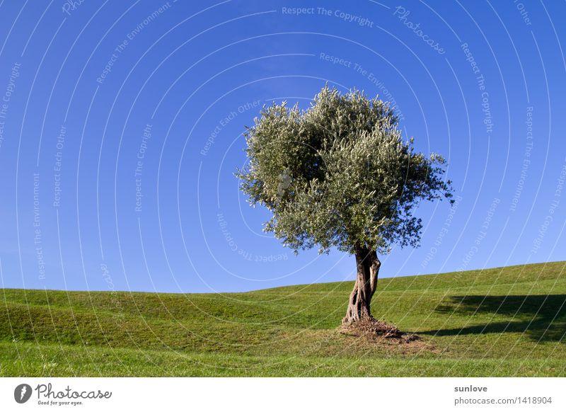 Schöner einsamer Baum auf dem Hügel unter einem freien blauen Himmel Erholung ruhig Garten Umwelt Natur Landschaft Pflanze Wolkenloser Himmel Sonnenlicht