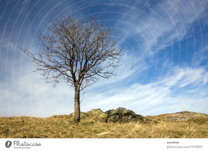 Schöner einsamer Baum auf dem Hügel Himmel Natur Pflanze blau schön weiß Sonne Einsamkeit Landschaft ruhig Wolken Umwelt gelb Herbst natürlich
