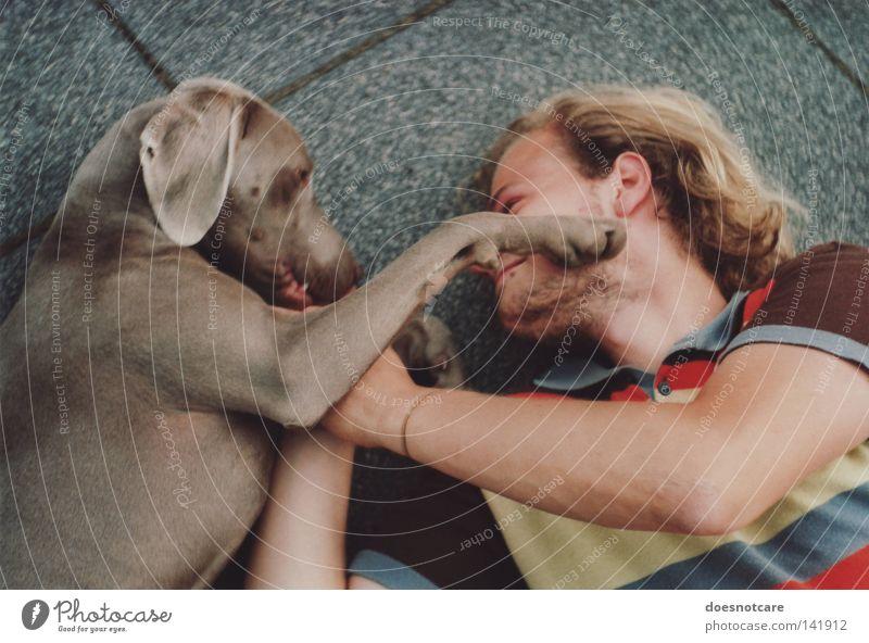 Friede, Freude, Hundekuchen. Spielen Mann Erwachsene Tier Haustier Pfote genießen niedlich Tierliebe Weimaraner Zuneigung Tierschutz analog Jagdhund Säugetier
