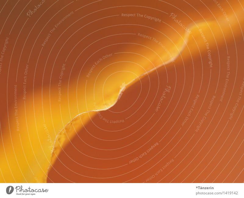 ein Hauch von Blatt Umwelt Natur Pflanze Herbst Schönes Wetter Garten Park Wald ästhetisch außergewöhnlich positiv schön gelb orange achtsam ruhig Farbfoto