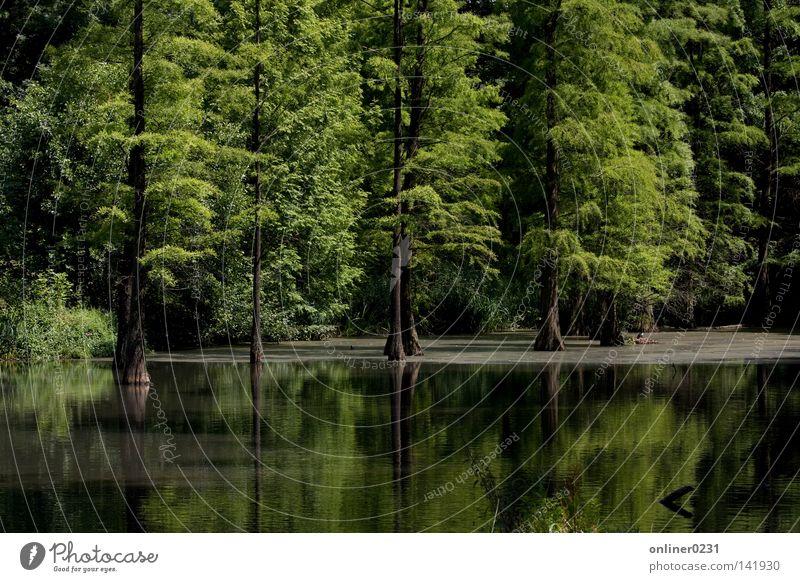 Idylle Baum Wald Frühling See Park Ruhrgebiet Teich Dortmund