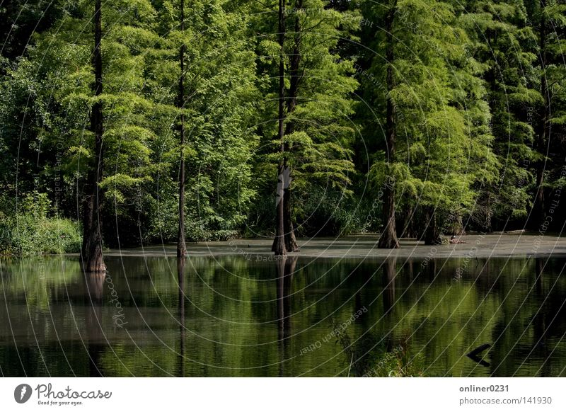 Idylle See Wald Teich Baum Reflexion & Spiegelung Dortmund Park Frühling Rombergpark Canon