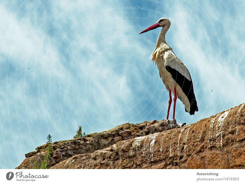 Majestät Himmel Natur Pflanze blau weiß Wolken Tier schwarz Wand Mauer Stein braun Vogel oben Wetter Wildtier