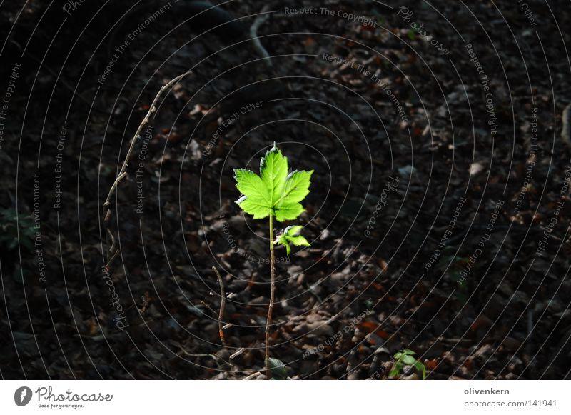 Trieb im Wind grün Baum Blatt Stengel Blattgrün Reifezeit