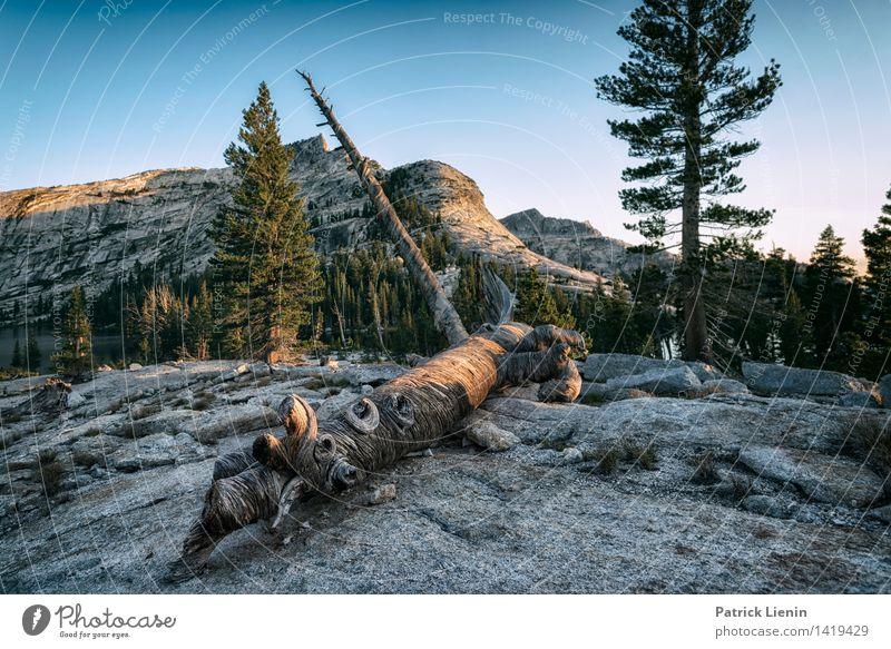Yosemite National Park Himmel Natur Ferien & Urlaub & Reisen Pflanze Sommer Landschaft Erholung ruhig Ferne Wald Berge u. Gebirge Umwelt Leben Freiheit Felsen