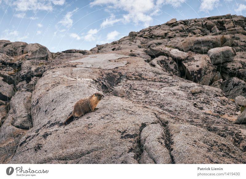 Marmot Wellness Leben harmonisch Wohlgefühl Zufriedenheit Sinnesorgane Erholung ruhig Meditation Tourismus Ausflug Abenteuer Umwelt Natur Landschaft Urelemente