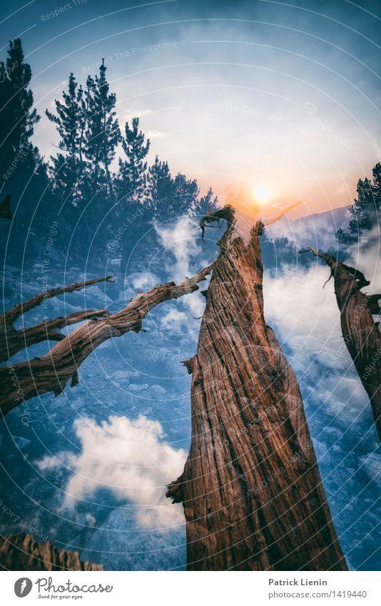 Tree of Life Himmel Natur Ferien & Urlaub & Reisen Pflanze Sommer Baum Erholung Landschaft Wolken ruhig Ferne Wald Berge u. Gebirge Umwelt Leben Freiheit