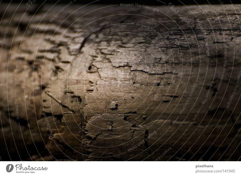 Gehölz Holz dreckig Schlamm Sand Sommer Ordnung Strukturen & Formen Blatt Moos feucht dunkel braun schwarz glänzend niedlich Riss nass Wasser grau