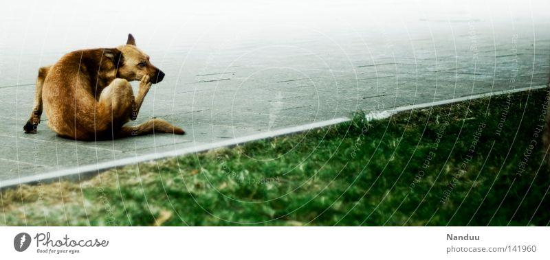 Hund und Schief Wiese kratzen dunkel grau gekrümmt Linie Bellen Bulgarien Sofia Tier Leben Säugetier Fell weich Angst Panik Sommer jucken sitzen Grünstreifen