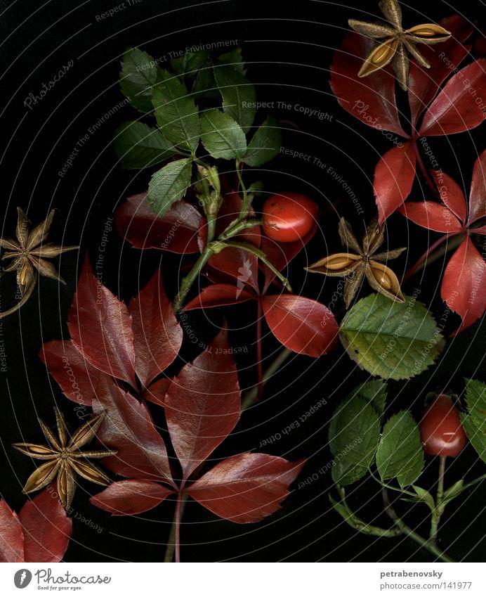 herbstgefühle rot Herbstlaub Stillleben grün Blatt anissterne Heilpflanzen Unkraut Hundsrose