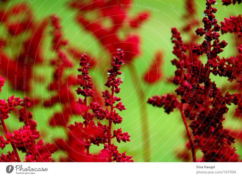 rotes im grün Natur Blume Wiese Sträucher Blumentopf