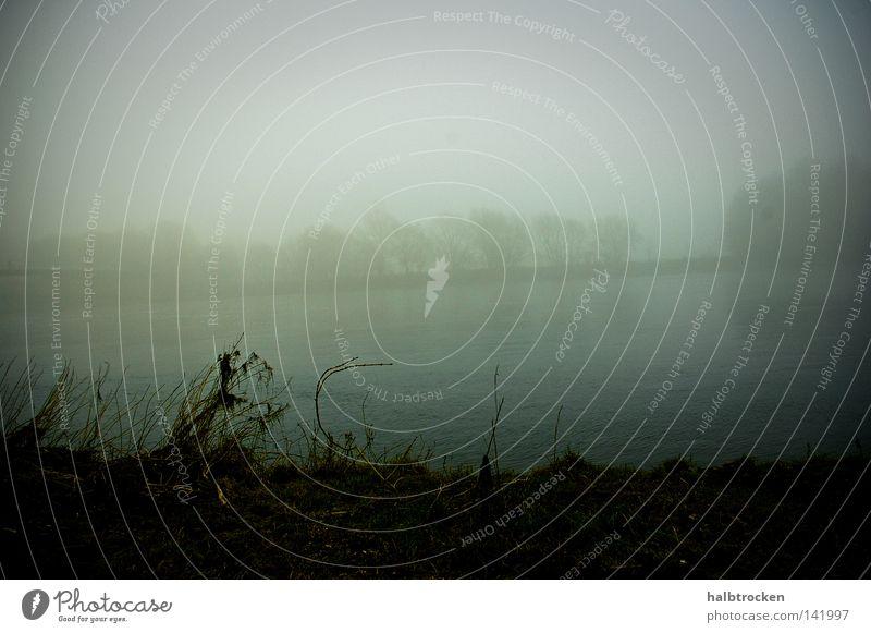 Hopeless cases See Wasser Nebel ruhig Seeufer Natur Wetter Baum Winter