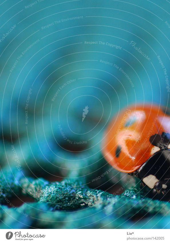 Marienkäfer grün rot Einsamkeit klein orange Insekt Punkt niedlich Fleck Tiefenschärfe Käfer Marienkäfer krabbeln dezent Brennpunkt Außenseiter