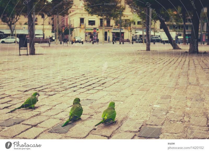 Die 3 sind sich grün Stadt lustig Vogel Stadtleben Platz Spanien Barcelona