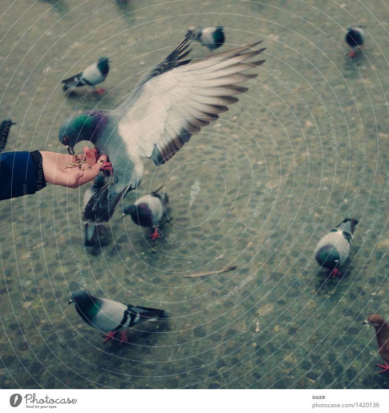 Lieber die Taube in der Hand ... Hand Tier Freude Straße Bewegung grau fliegen Vogel wild Freizeit & Hobby frei Arme Flügel Platz Tiergruppe tierisch
