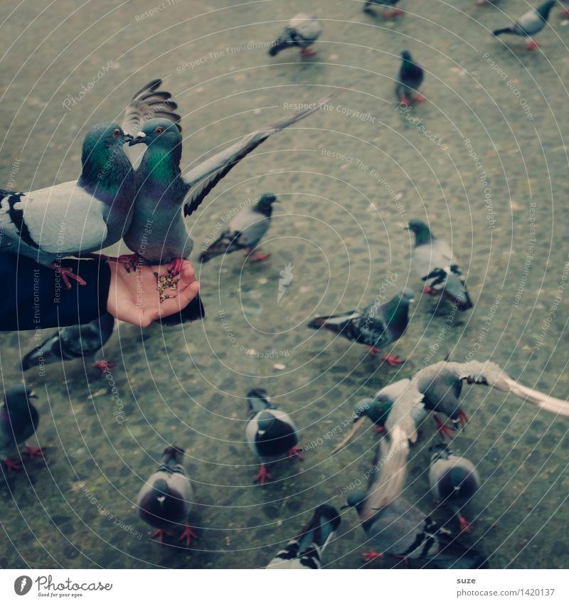 Turtelinis Freude Freizeit & Hobby Flirten Arme Hand Tier Platz Marktplatz Straße Wildtier Vogel Taube Flügel Tiergruppe Tierpaar Bewegung fliegen füttern Liebe