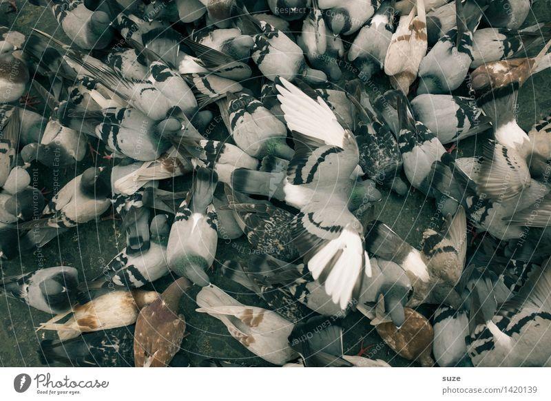 Schnäppchenjäger Tourismus Städtereise Stadt Platz Straße Tier Wildtier Vogel Taube Tiergruppe Schwarm fliegen Fressen füttern authentisch dreckig wild grau