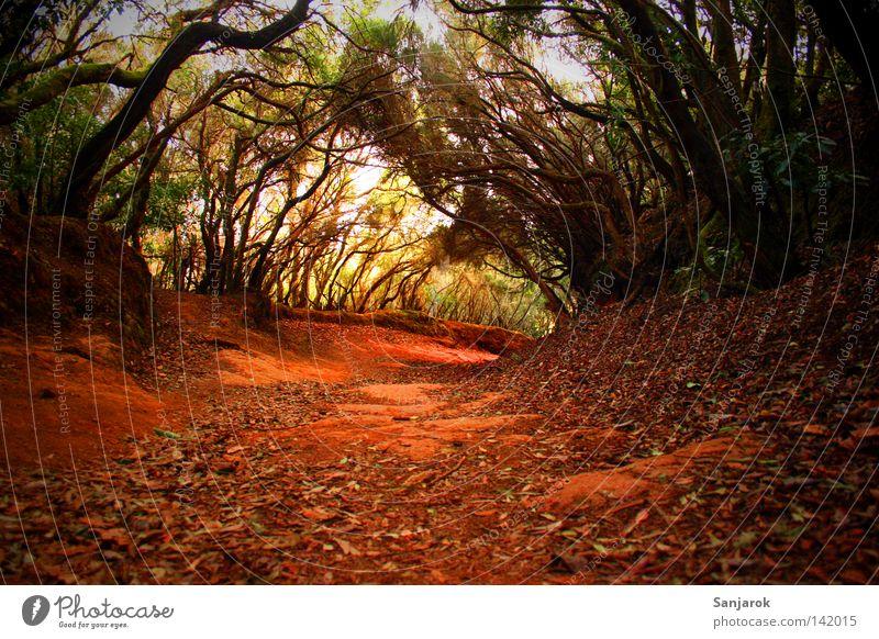 Hat jemand meine Brotkrumen gesehen? grün Baum dunkel Wald Wege & Pfade Sand Erde Sträucher Fußweg Boden Afrika Urwald Kanaren Teneriffa Hexe