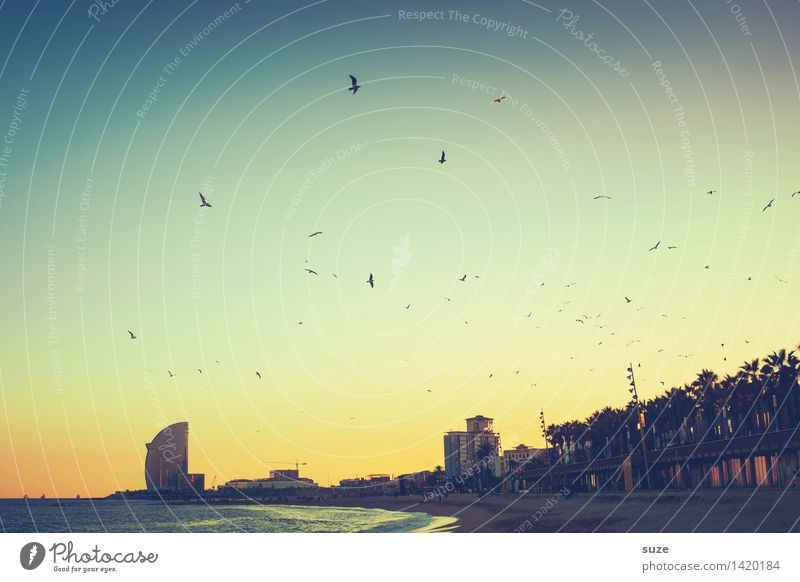 Stimmungshoch Himmel Ferien & Urlaub & Reisen Stadt Meer Strand Architektur Gefühle Küste Vogel Hochhaus Europa fantastisch Romantik Unendlichkeit Bauwerk