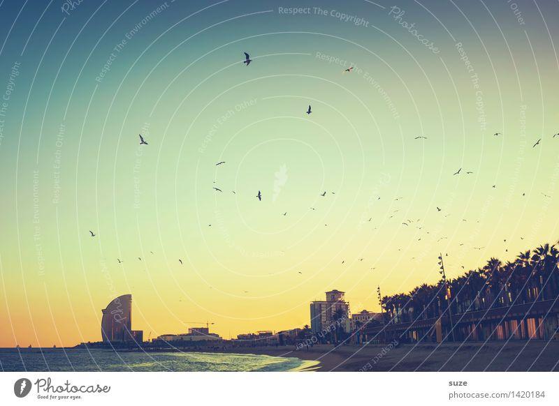 Stimmungshoch Himmel Ferien & Urlaub & Reisen Stadt Meer Strand Architektur Gefühle Küste Vogel Stimmung Hochhaus Europa fantastisch Romantik Unendlichkeit Bauwerk