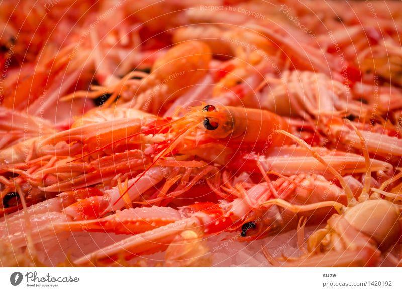 Auf frischer Tat ertappt ... Lebensmittel Meeresfrüchte Ernährung Essen Büffet Brunch Fastfood Asiatische Küche Gesunde Ernährung Tier exotisch lecker rot