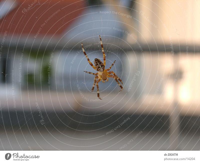 Spinne Unschärfe Balkon Dach Haus Netz