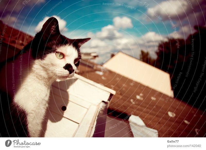 Ausblick Katze Blick Dach Haus Erholung genießen Luft Säugetier Fin Finnie beobachten Freiheit frei