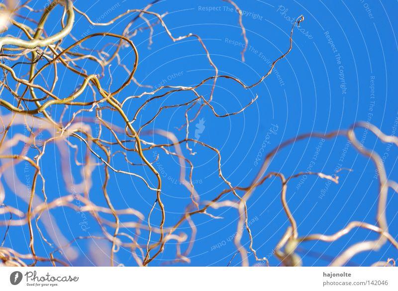 Wuchsmittel Himmel blau Baum Pflanze Natur Unschärfe Geäst Zweige u. Äste kalt Ast