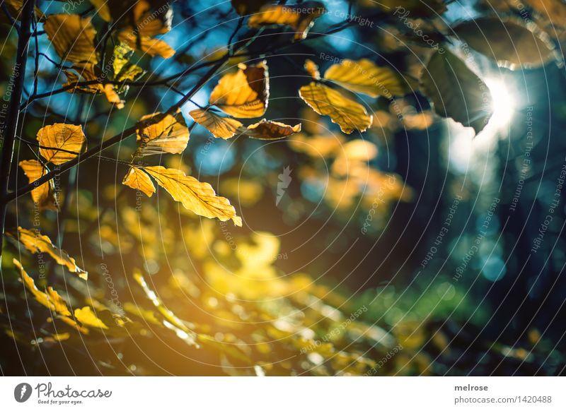 Goldschimmer Natur Stadt blau grün Sonne Baum Wald Wärme Herbst Stil Stimmung glänzend träumen leuchten gold Vergänglichkeit