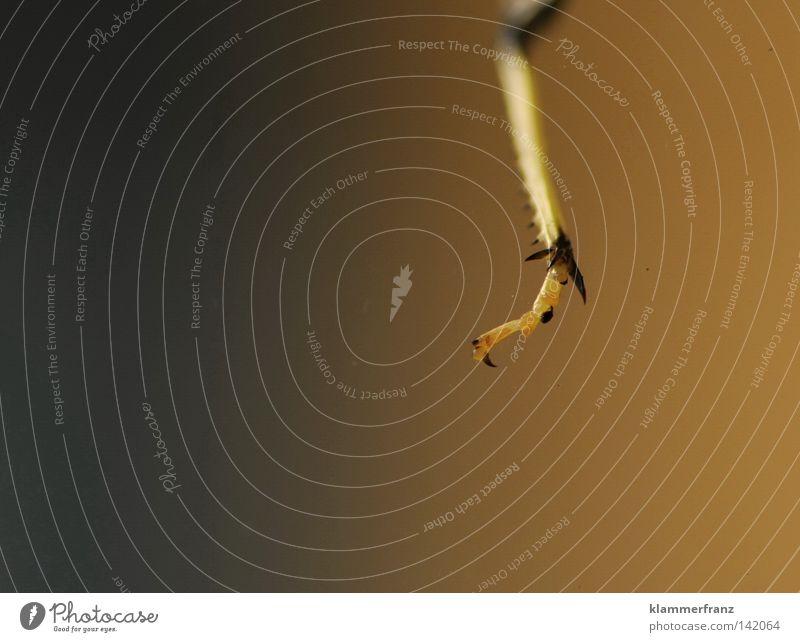 Abhängen Insekt Anschnitt Detailaufnahme Makroaufnahme Bildausschnitt Textfreiraum links filigran Beine