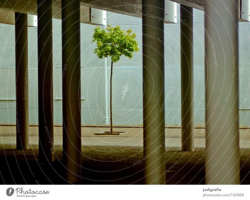Stadtbegrünung Baum grün Stadt Pflanze Einsamkeit Farbe Architektur klein Beton Hoffnung modern zart Säule Hannover