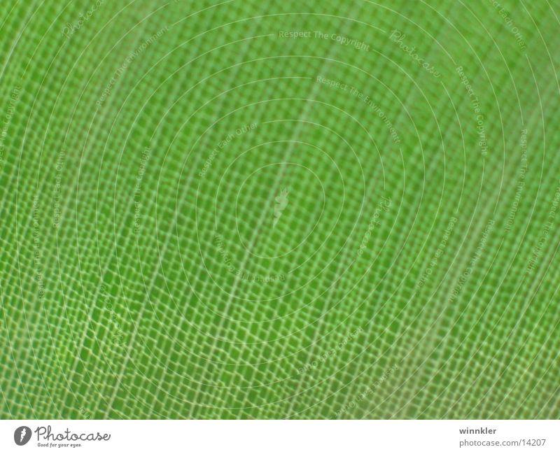 grünpflanzenmegablatt Pflanze Blatt Gefäße Makroaufnahme Strukturen & Formen