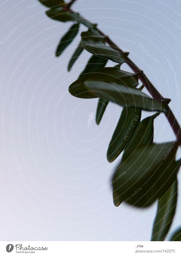 zweig Natur Himmel Baum grün blau Pflanze Perspektive Ast Zweig Geäst Zweige u. Äste hell-blau