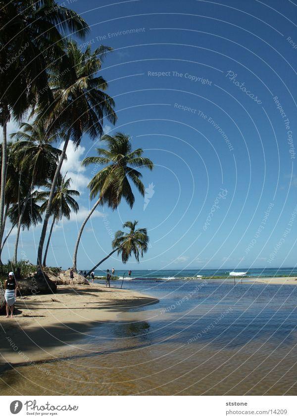 Palmenstrand Wasser Meer Strand Sand Kuba Palme Dominikanische Republik Blauer Himmel Punta Cana