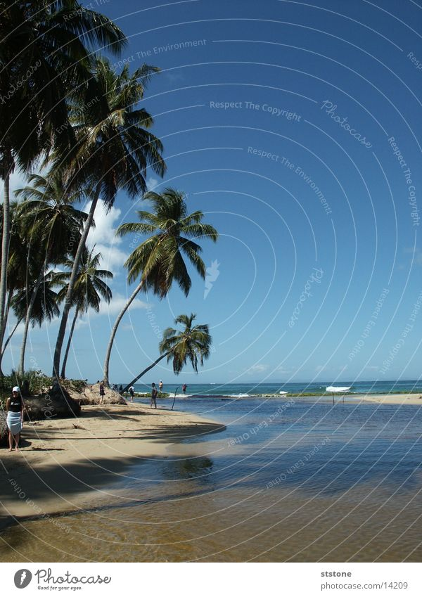 Palmenstrand Wasser Meer Strand Sand Kuba Dominikanische Republik Blauer Himmel Punta Cana