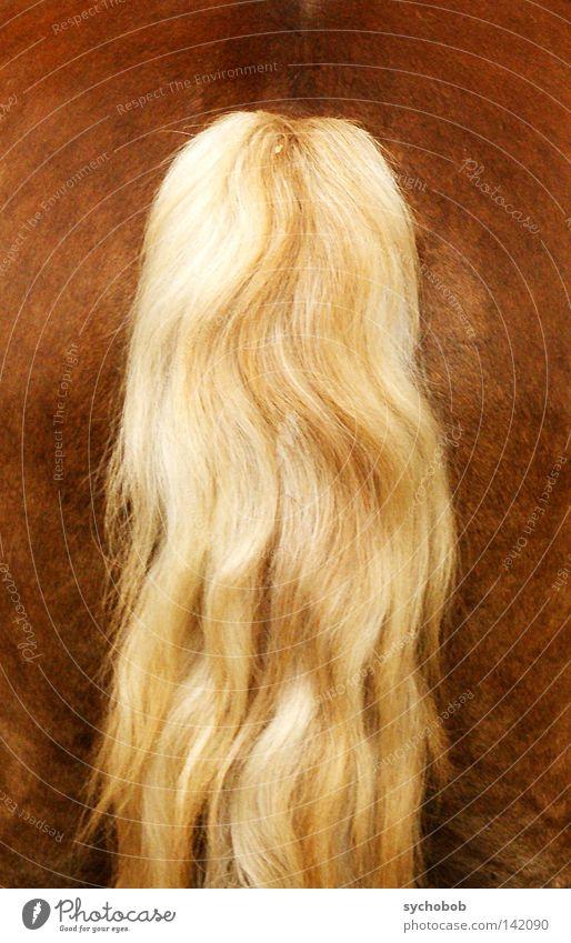 Rückansicht Tier Haare & Frisuren blond Pferd Gesäß Hinterteil Säugetier Schwanz