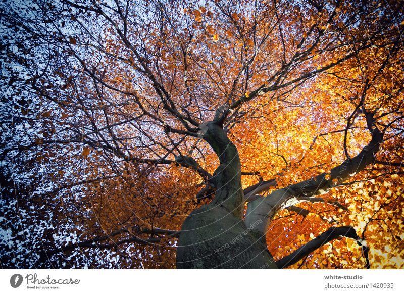 Herbstverlauf Natur Pflanze blau Baum Blume Blatt Umwelt Leben braun orange gold Lebensfreude Ast Vergänglichkeit Wandel & Veränderung