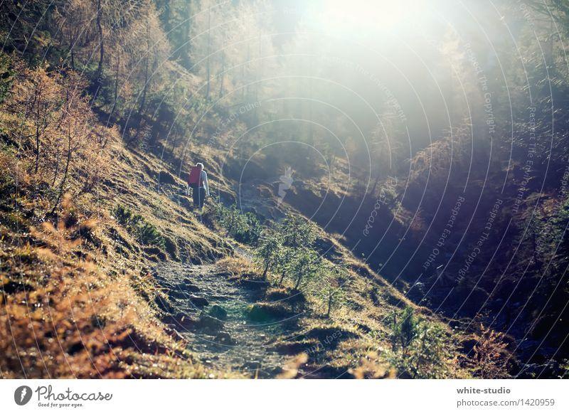 Wanderslust Mensch Frau Jugendliche Himmel (Jenseits) Junge Frau Einsamkeit Wald Berge u. Gebirge Erwachsene Herbst Wege & Pfade feminin Sport Gesundheit oben