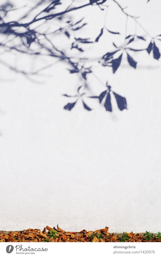 textfreiraum mitte Natur Baum Blatt Umwelt Wand Herbst Mauer Garten Ast Kastanienbaum Schattenspiel