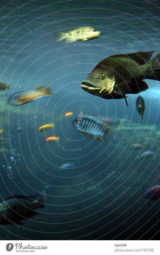 Wo ist Arielle ? frisch Untersee Wasseroberfläche Bar Lebewesen Vielfältig Artenreichtum Aquarium Tier See Meer mehrfarbig Luft Luftblase Wellen Strömung