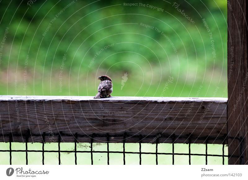 a vogerl 2 Natur grün ruhig Einsamkeit Tier Wiese Gras Holz Linie Vogel klein Beton sitzen Pause Netz Flügel