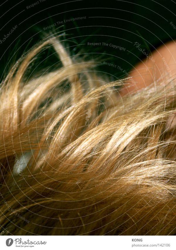 the wind that shakes the barley Haare & Frisuren glänzend Gold Korn Getreide Kornbrand Sturm Wind Gerste Ordnung Strukturen & Formen Linie Wellen wellig Dynamik