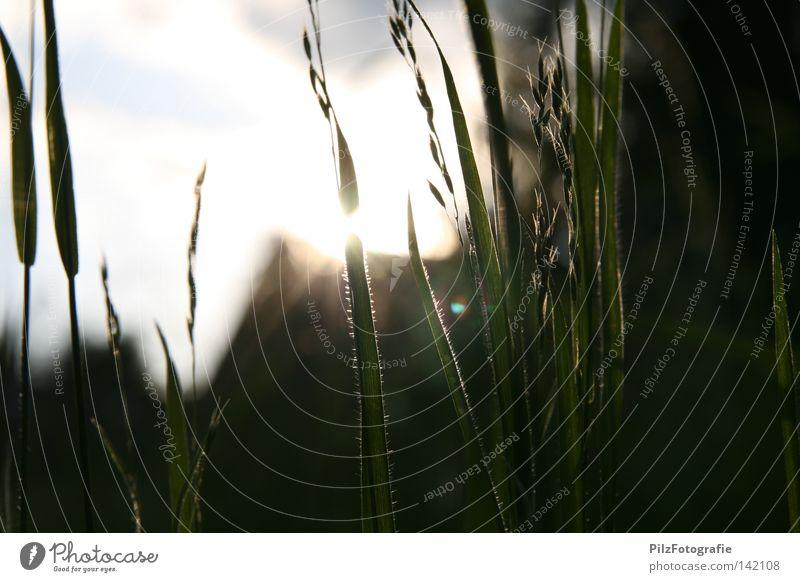 Untergang Sonne Wiese Gras Sträucher Halm Haus Dach schwarz grün weiß blau Gegenlicht Sonnenuntergang Sonnenstrahlen Unschärfe Himmelskörper & Weltall Sommer
