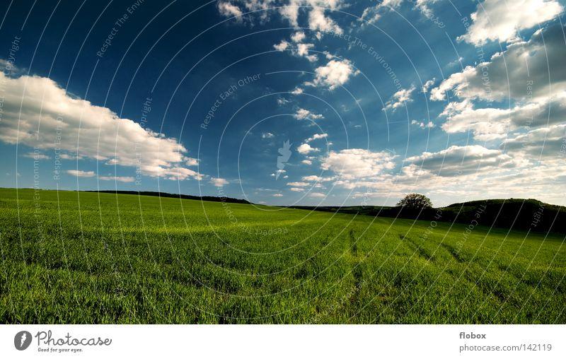 It's a beautiful day II Feld Landwirtschaft Ferne Wolkenhimmel grün blau Außenaufnahme Landschaft Natur Menschenleer Zentralperspektive Panorama (Aussicht)