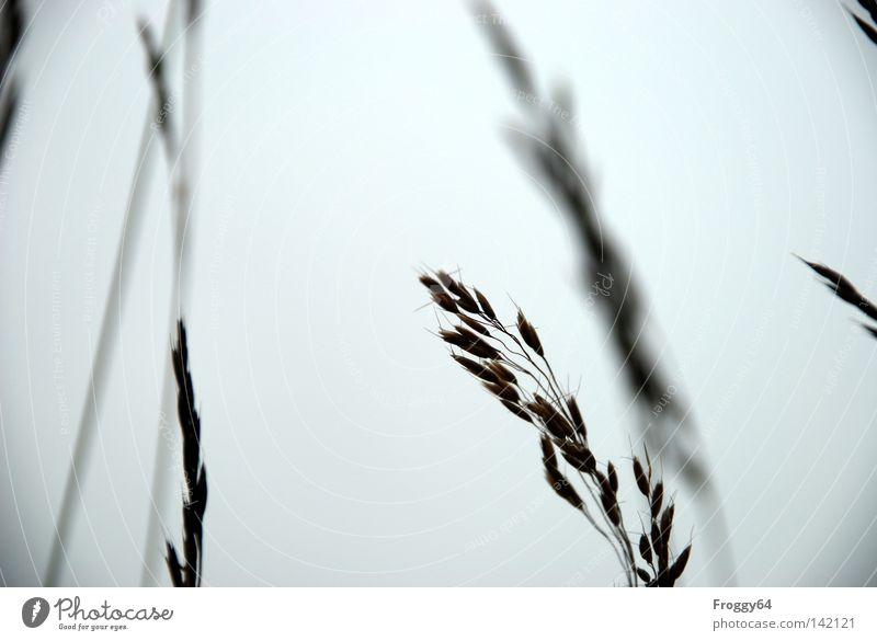 Gras Himmel Sommer Wolken Erholung Wiese Blüte Gras wandern Wind laufen Verkehr Pause Stengel Samen Beeren Ähren