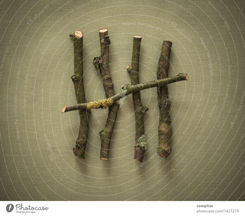 Zählen Garten Technik & Technologie Fortschritt Zukunft High-Tech Holz Zeichen Ziffern & Zahlen Genauigkeit zählen Mathematik 5 Ast Zweig Zweige u. Äste Baum