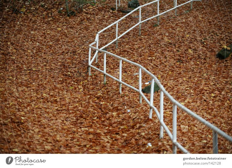 Weglos Blatt Herbst Wege & Pfade Linie Verkehrswege Treppengeländer Waldboden planlos